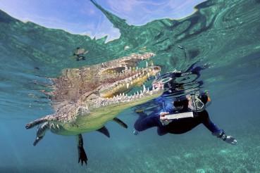 跟鳄鱼在一个水池里度假,这不是一般人敢的