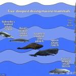 南极洲发现神秘歌声 可能来自未知新种鲸鱼