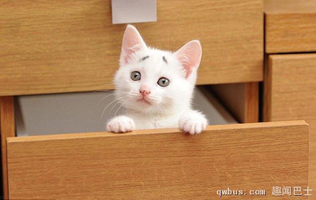 壁纸 动物 狗 狗狗 猫 猫咪 小猫 桌面 634_402