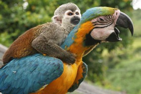动物也会偷懒 看这些家伙是怎样搭便车的