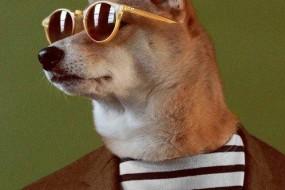 超模狗狗教你服饰搭配还出书了
