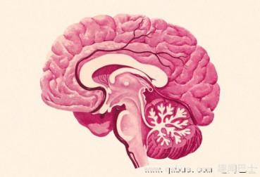 科学用脑:要想记得牢也要善于遗忘