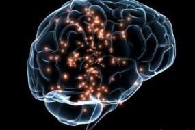 """科学家:""""利他""""和""""自私""""的大脑活动不同"""