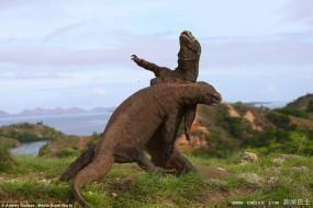 侏罗纪世界来客 恐怖科莫多巨蜥