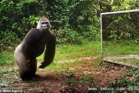 各种动物在看到镜子中的自己时的反应