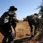 探秘南非私人狩猎区:大量野生动物被捕杀