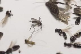 微软要用无人机捉蚊子