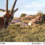 红外自动相机近距离偷拍野生动物