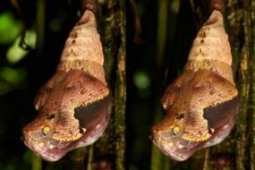 动物伪装高手变身毒蛇吓唬捕食者