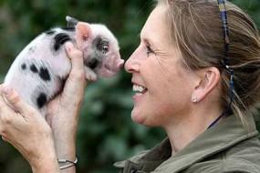 研究表明猪猪比狗狗聪明 情感更丰富