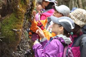 观察苔藓也能减压 日本有众多苔藓女孩