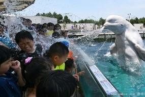 调皮白鲸玩得兴起 喷水浇观众瞬间透心凉