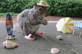 这几只校园中的小松鼠太会摆pose了