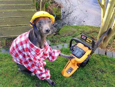 那些能做家务的宠物 清洁工整草坪无所不能