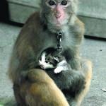 泼猴抢小猫当宠物