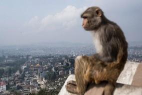 印度猴成了精 抢完钱还到处撒