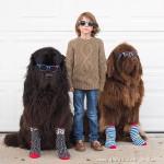 男孩和两只大狗、一匹马的成长记录