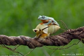 狡猾青蛙骑蜗牛去旅行