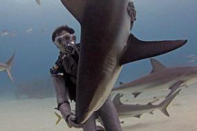 凶猛鲨鱼被催眠后变温顺任人摆布