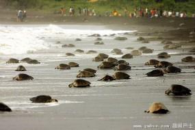 无人机新用途:保护海龟产卵