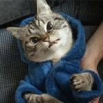 萌猫网络爆红只因虎牙太长像吸血鬼