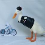美女主人为鸭子打扮 造型逗趣可爱