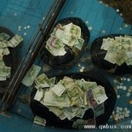 神龟背甲堆满纸币 动物园捞钱到手软