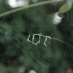 """摄影师拍到笑脸蜘蛛在网上织出""""大笑""""字母"""