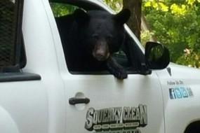 大胆母熊上车蹭饭还偷吃的喂幼仔