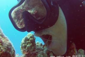 大胆清洁虾跳潜水员嘴里为他刷牙