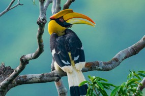 世上最钟情的鸟:结对后相伴一生永不分离