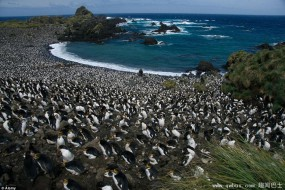 神秘小岛成企鹅天堂 被400万只企鹅占领