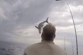 巨鲨突然跃出水面垂钓客吓尿了