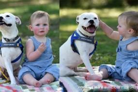 独臂的宝宝与独臂的小狗的故事
