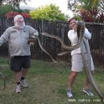 蟒蛇争风吃醋在屋顶打架