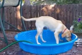 狗狗为消暑自己叼起水管洒水淋浴
