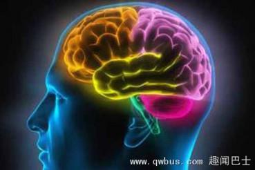 科学家制造出近乎完整人类大脑