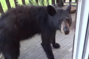 野熊进屋闲逛被房主机智请出门