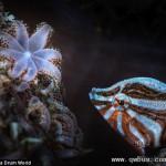深海生物色彩艳丽体型奇特