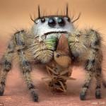 摄影师微距拍蜘蛛捕食