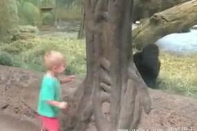 鬼精大猩猩与幼童绕树捉迷藏