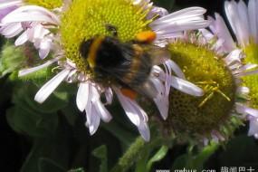 勤劳小蜜蜂原来也会偷东西