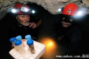 罗马尼亚充满毒气洞穴存在奇特动物