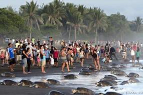 游人严重干扰濒危海龟上岸产卵