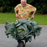 巨型蔬菜大赛:瞬间觉得人变小了