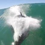 男子冲浪时拍下和海豚对撞画面