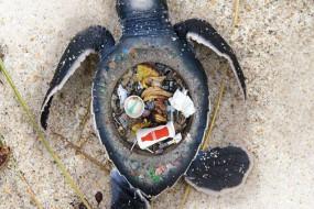 男子创作图片形象说明海洋垃圾危害