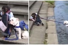 逆天猴子会遛狗 牵斗牛犬过河