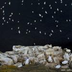 精彩野生动物摄影令人震撼