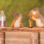 小松鼠受引诱变酒鬼